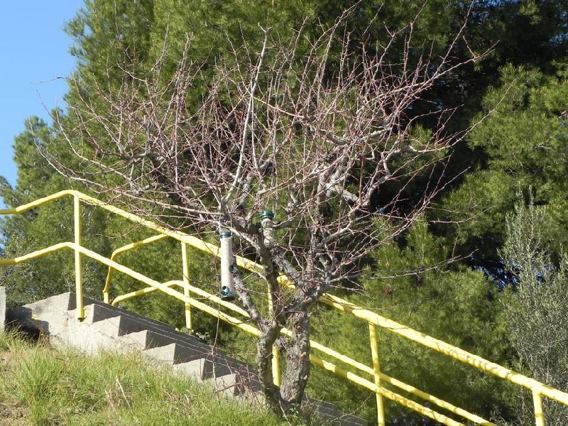 Solvay y la Fundacio World Nature creen el primer Refugi WN del Baix Llobregat Nord